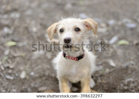 Puppy cute is an adorable fluffy puppy looking up with curious and wonder in his eyes. - stock photo