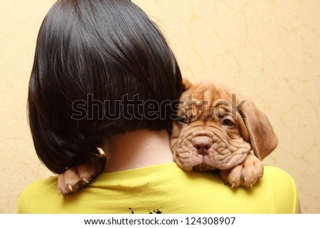 puppy dog breed Dogue de Bordeaux - stock photo