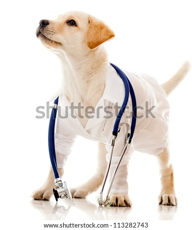 Puppy dog dressed as a vet - isolated over a white background - stock photo