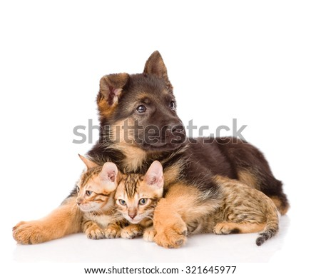puppy dog embracing little kittens. isolated on white background - stock photo