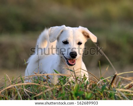 puppy dog in green meadow grass - stock photo