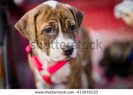 puppy dog on pickup car - stock photo
