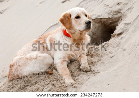 Puppy dug a hole in the sand - stock photo