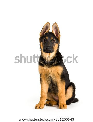 Puppy german shepherd dog sitting on white background 2 - stock photo