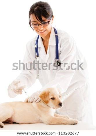 Puppy getting a vaccine at the vet - isolated over a white background - stock photo