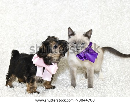 Puppy giving kisses to a not so willing kitten with a eww look on her face. On a white background with copy space. - stock photo