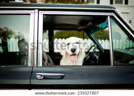 Puppy goes for a ride - stock photo