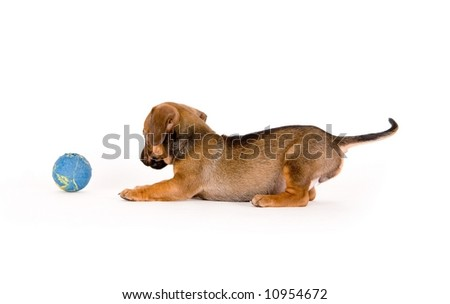 Puppy having fun with a ball - stock photo