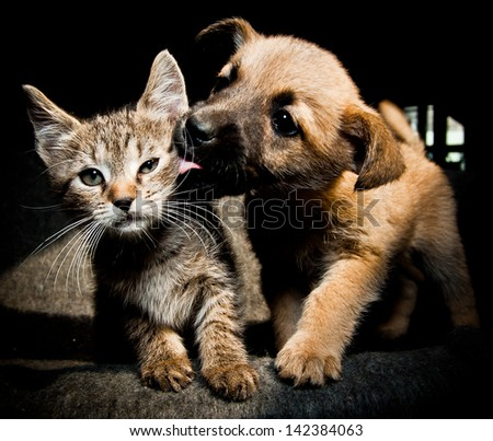 Puppy kitty lick kiss and love - stock photo