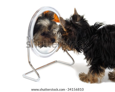Puppy looks in the mirror - stock photo