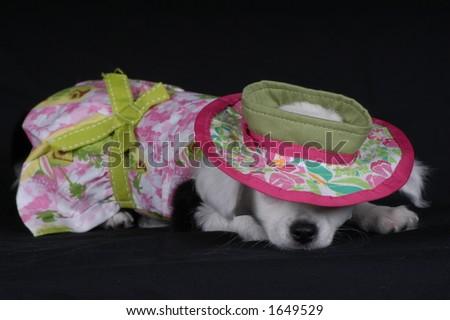 Puppy Nap - stock photo