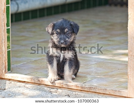 Puppy on the animal asylum - stock photo