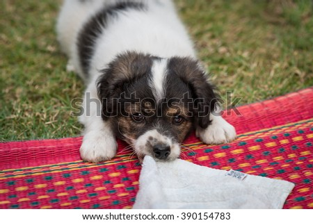 Puppy playing on the green grass garden - stock photo