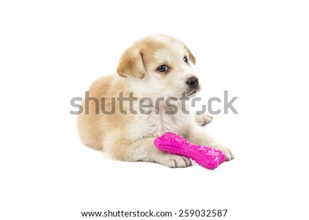Puppy playing with a pink bone toy against a white background - stock photo