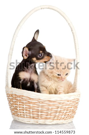 puppy plays with a kitten. isolated on white background - stock photo