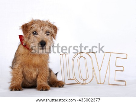Puppy sitting beside the word love which is made out of bronze colored metal wire - stock photo
