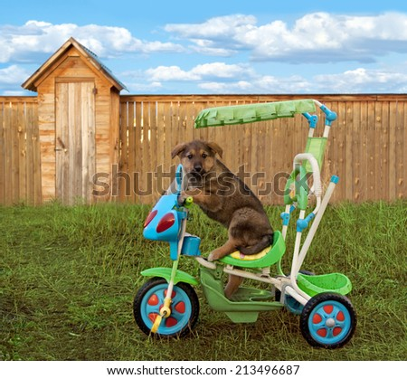 Puppy sitting on a tricycle child bicycle - stock photo