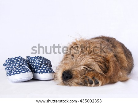 Puppy sleeping beside a pair of blue baby shoes - stock photo