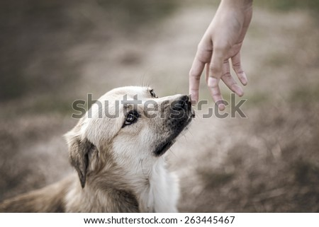 puppy smelling woman hand , vintage background - stock photo