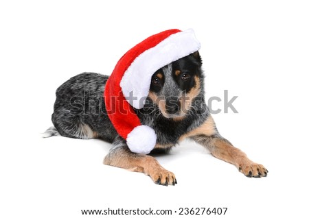 puppy wearing a santa hat isolated white background - stock photo