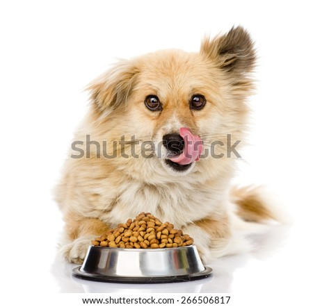 Puppy with a bowl of dry dog food. isolated on white background - stock photo