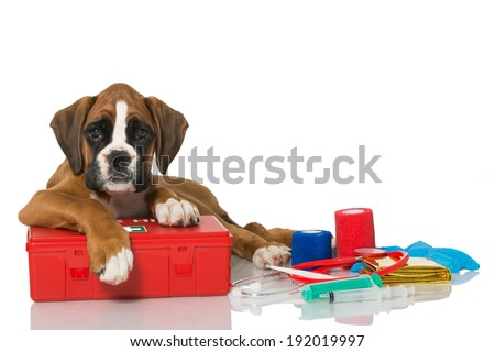 Puppy with first aid kit - stock photo