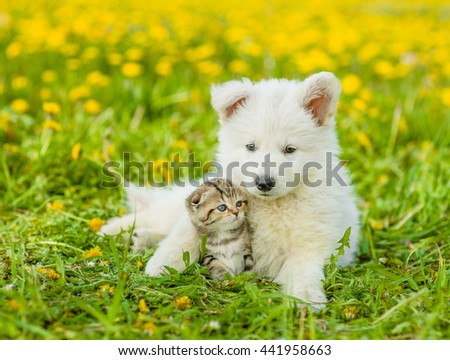 Puppy with playful kitten on a dandelion field - stock photo