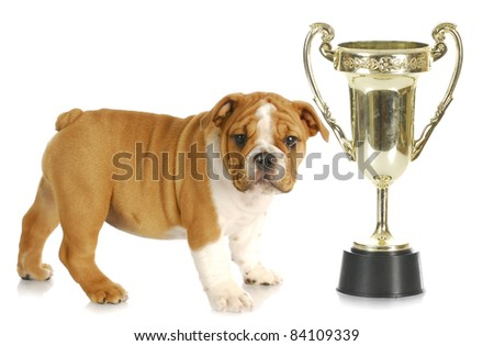 puppy with trophy -english bulldog standing beside large trophy - stock photo
