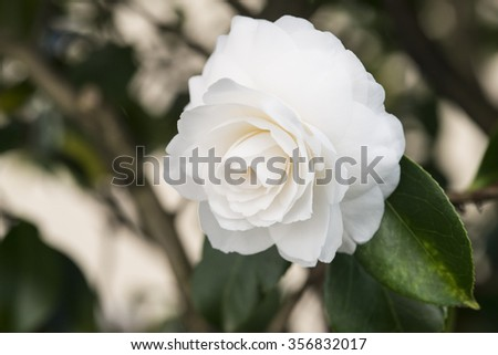 Pure flower - stock photo