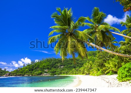 pure tropics, scenic beach with coconut palms - stock photo