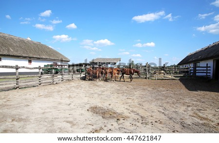 Purebred chestnut foals and mares eating forage in the corral summertime outdoor rural scene - stock photo