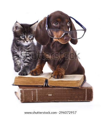 purebred dachshu  in glasses and kitten - stock photo