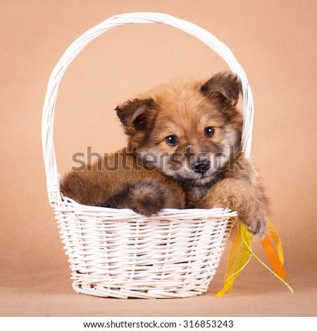 purebred puppy - stock photo