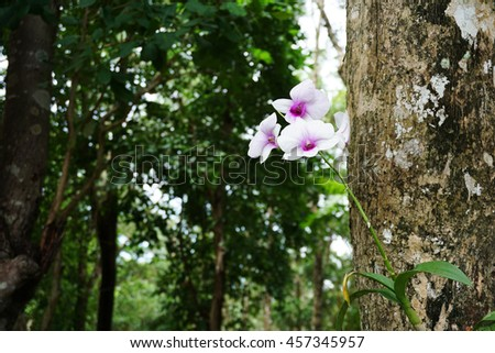 Orchids growing from tree trunks stock photos images pictures shutterstock - Flowers that grow on tree trunks ...