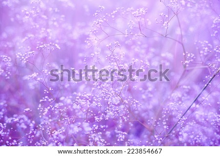 purple background with small flowers - stock photo