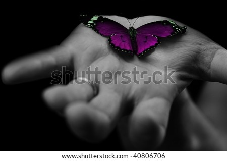 purple butterfly on human's hand - stock photo