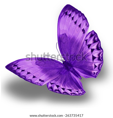 Purple butterfly upper wing profile flying up. - stock photo