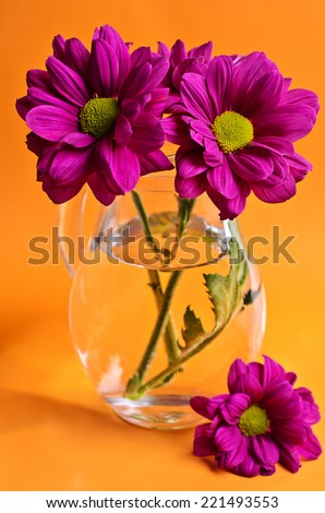 Purple chrysanthemum with a glass vase on orange background - stock photo