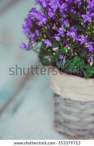 Purple decoration flower in flowerpot on vintage wooden table, filtered image - stock photo
