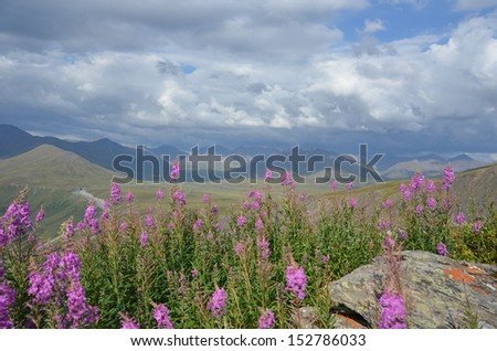 Purple Fireweed with Mountain Landscape - stock photo