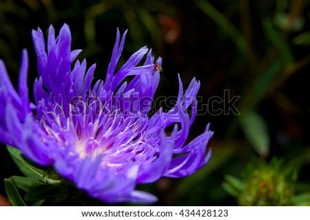 purple flower blooms  - stock photo