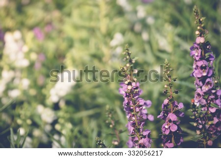 Purple flower field background under cloudy sky, On a bright sunny day - stock photo
