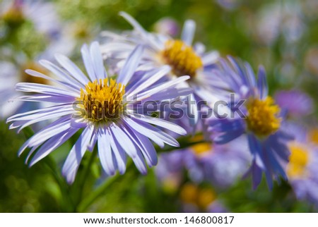 purple flower in meadow with green grass - stock photo