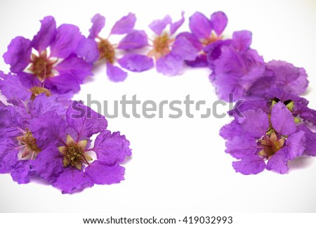 Purple flower name Inthanin or Lagerstroemia macrocarpa , Copy space. - stock photo