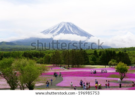 Purple flowers and Mt.Fuji in japan - stock photo