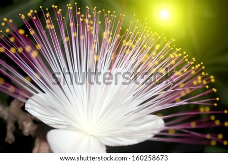 purple flowers blooming in the night - stock photo