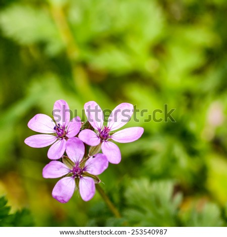 purple flowers in nature - stock photo