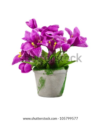 purple flowers, isolated on white - stock photo