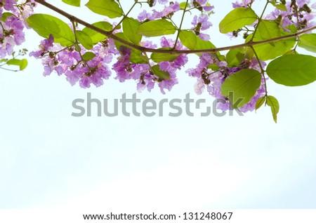 purple flowers on blue sky background - stock photo