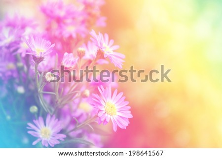 Purple flowers with pastel color filtered, sweet purple flowers on an old wood background. - stock photo